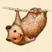 Photo engrave hamster illustration