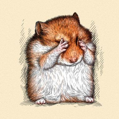 engrave hamster illustration