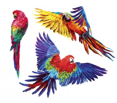 Colorful realistic parrots macaw