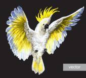Tropické papoušci chocholatý Kakadu