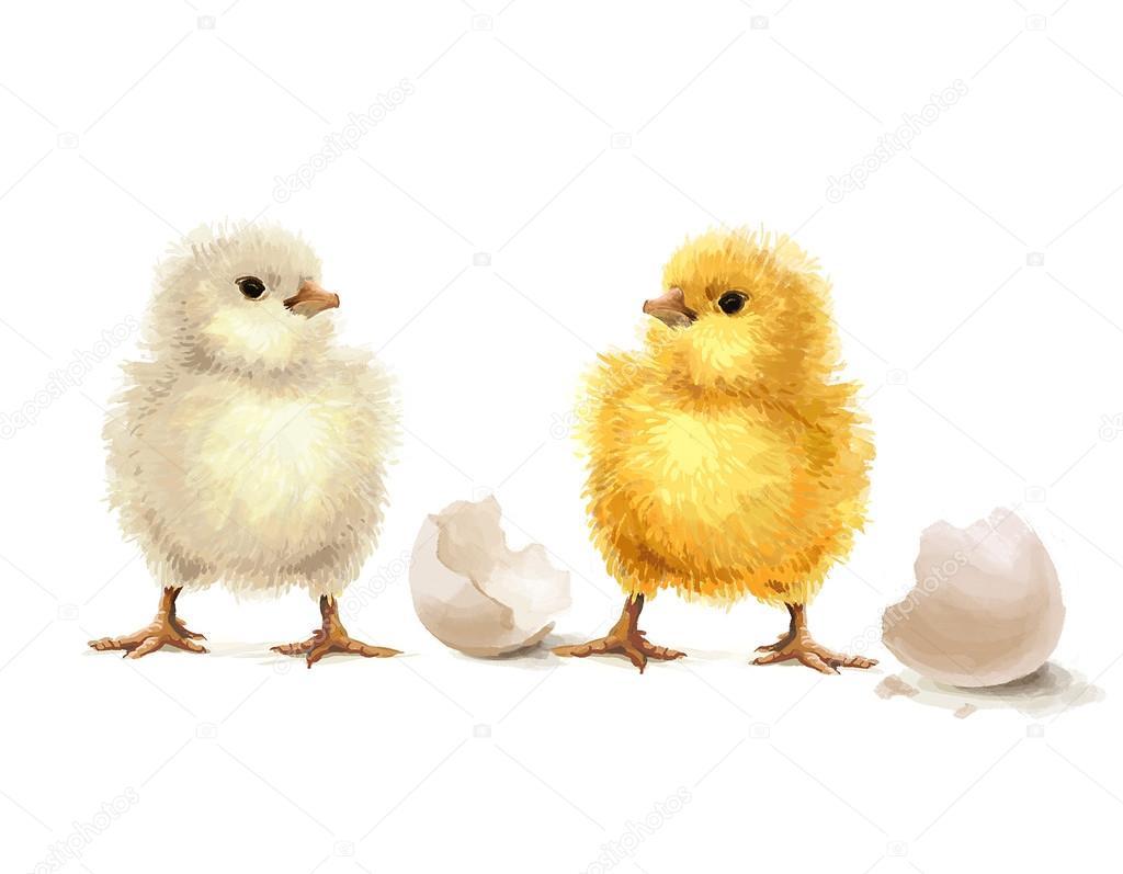 Easter realistic little chicken illustration