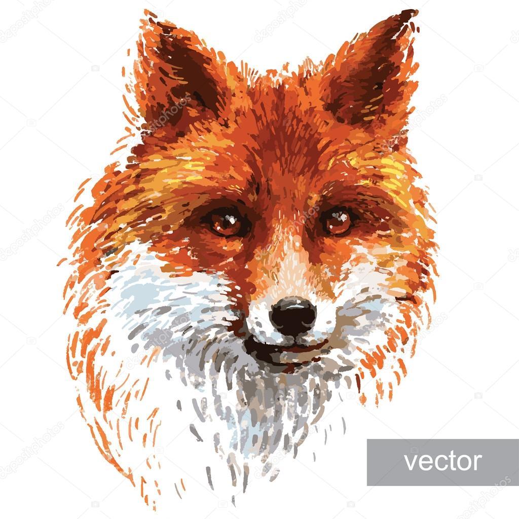 Illustrazione Di Volpi Per Illustrazione Di Volpe Colorata Su