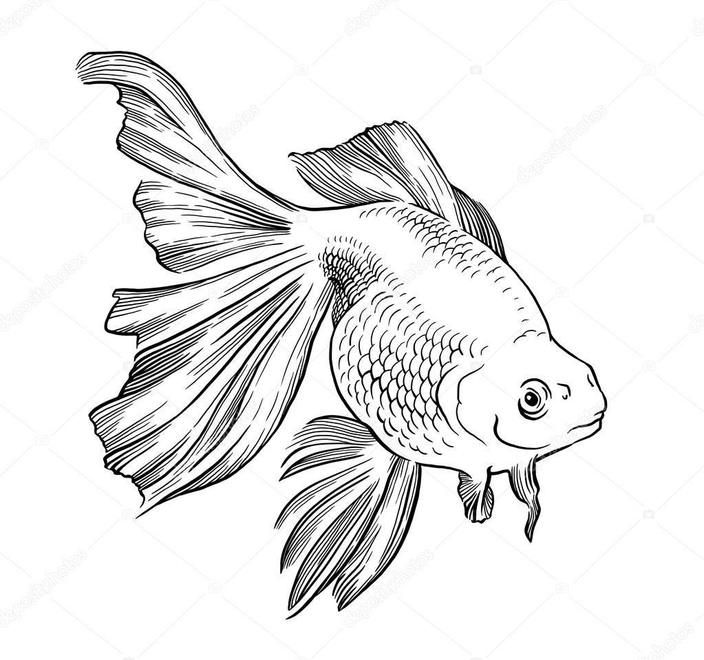 Goldfish illustration artwork  line underwater engraving black and white