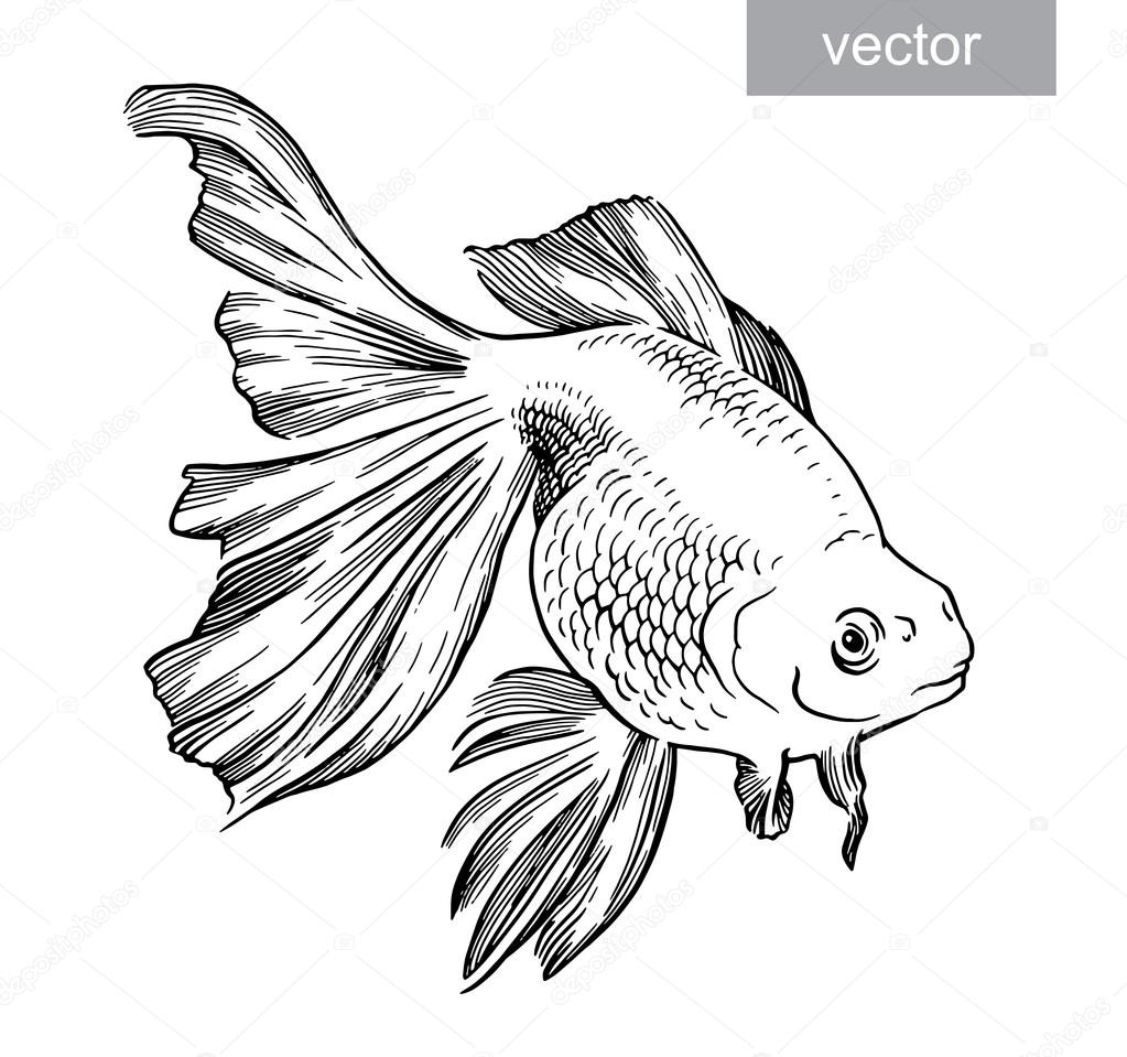 gold fish drawn illustration underwater engraving vector stock vector 96834704
