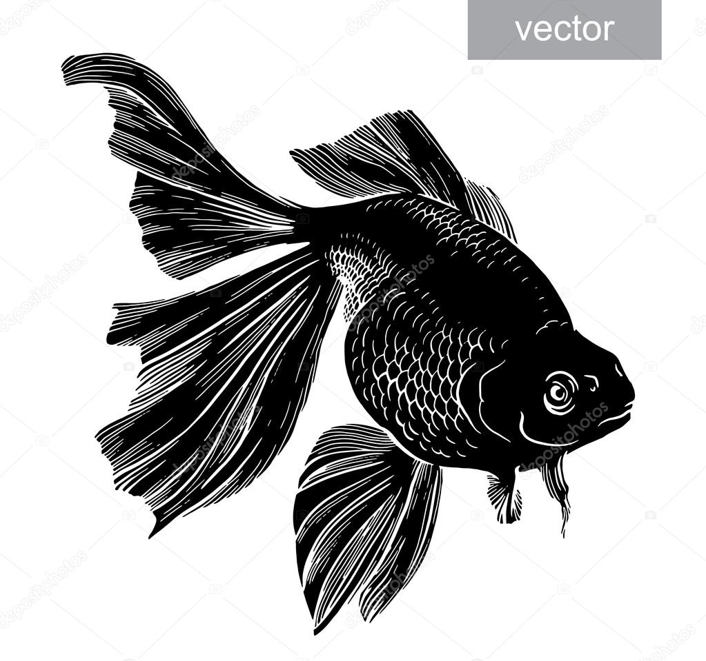 Gold fish drawn illustration underwater engraving vector