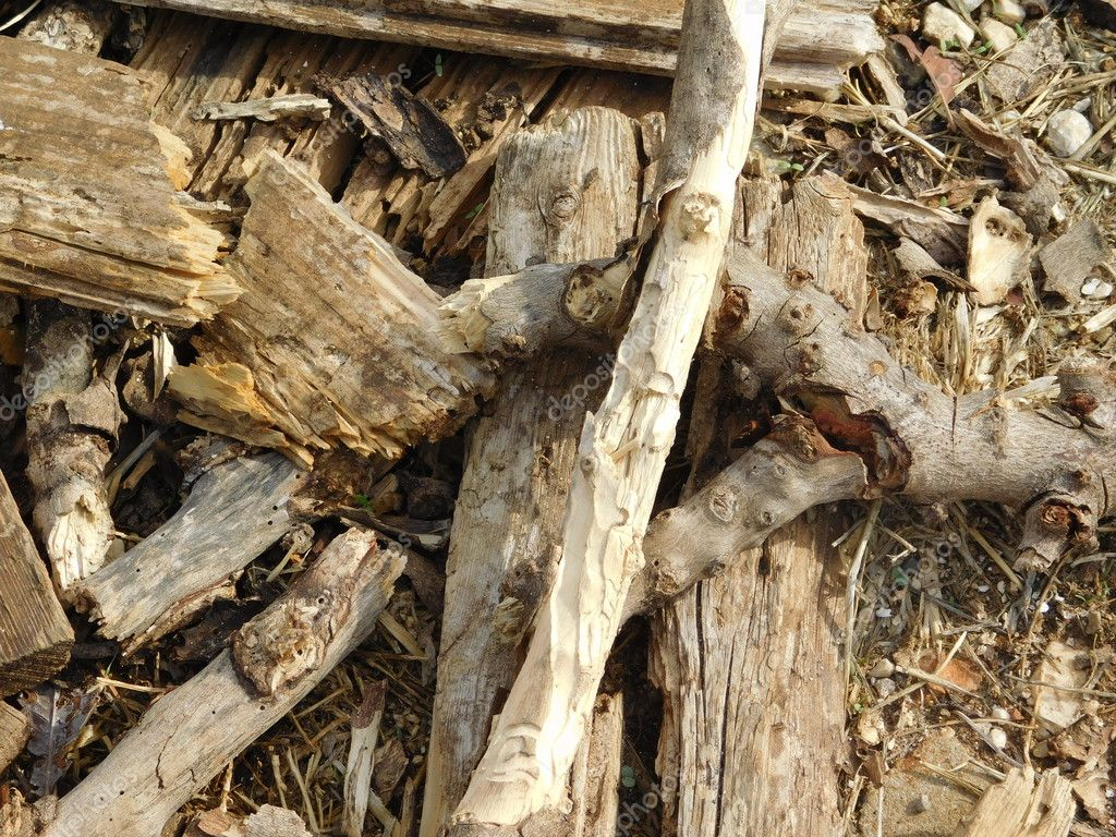 firewood and timber in outdoor campaign