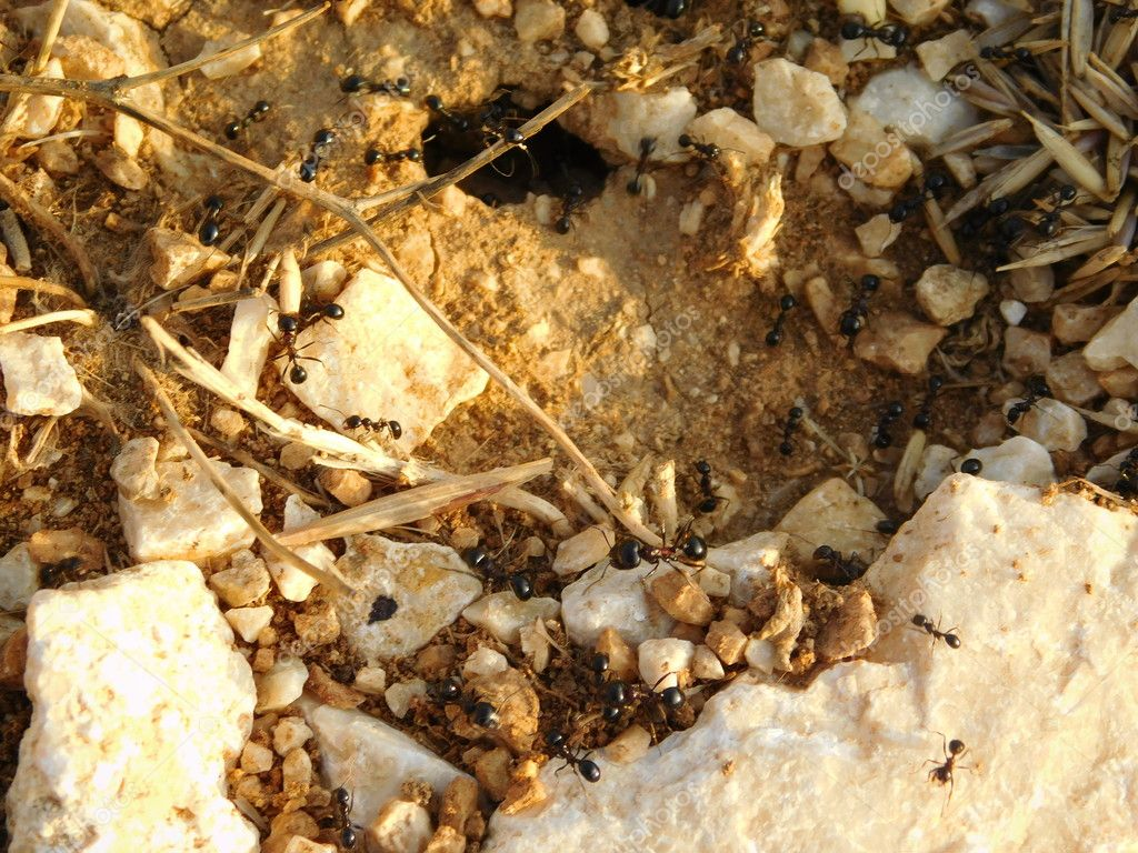 Anthill with ants in outdoor campaign