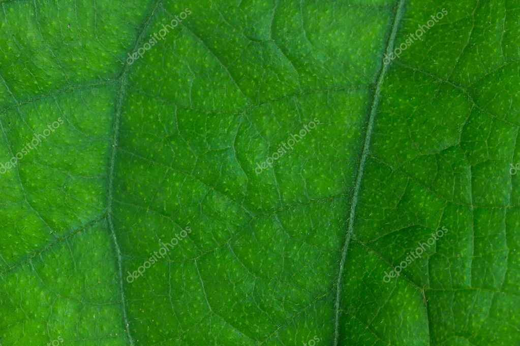Sfondo Verde Foglia Foto Stock Suwatsir 86832500