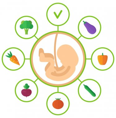 pregnancy embryo healthy food