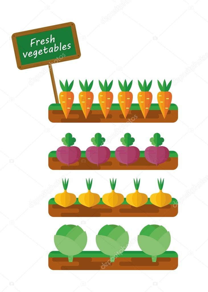beds with vegetables
