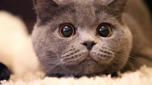 kočka s velkýma očima