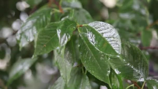 víz csepp leaf felületén