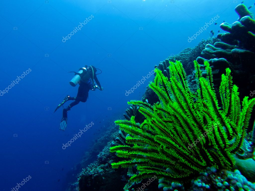 Very Bright green underwater Coral Plant in front of a diver