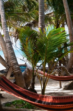 Closeup of Hammock for chillout relax Tied to Coconut Trees at the beach on Corn Islans Bar