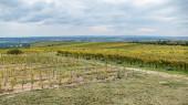 Weingüter in der Region Znojmo in Südmähren in Tschechien