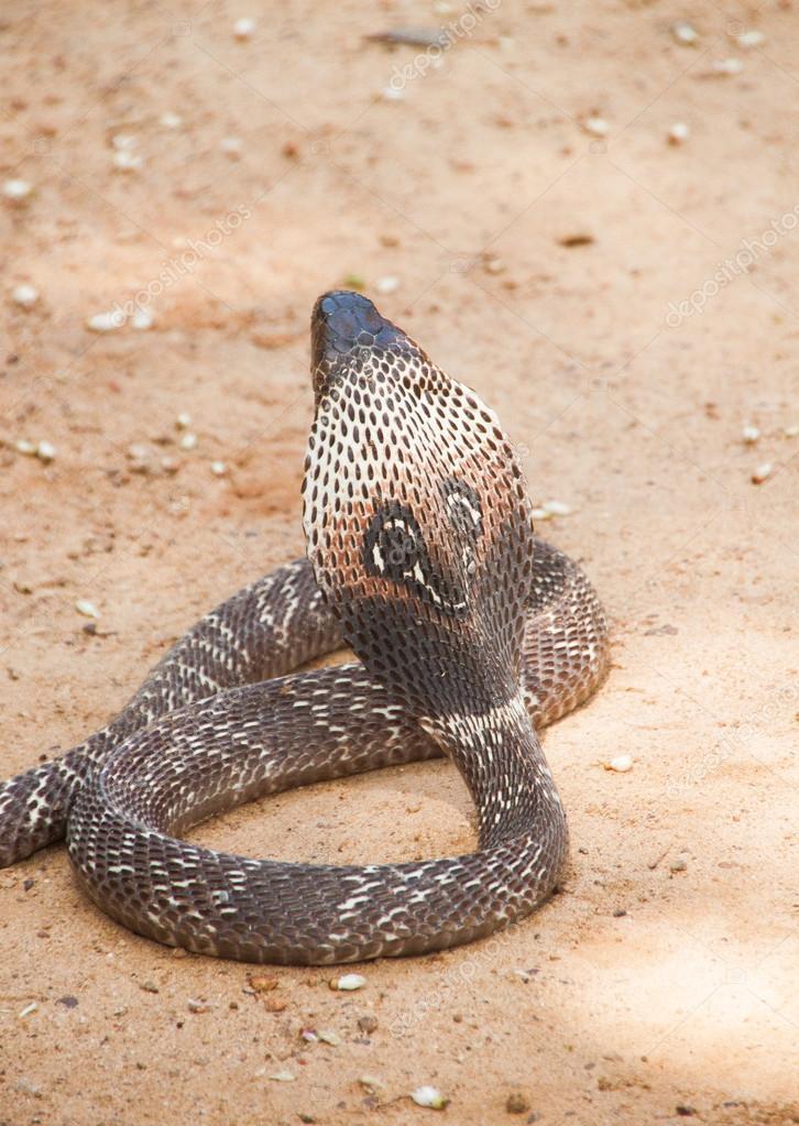 slanger sri lanka
