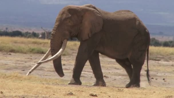 Extreme close up of a elephant