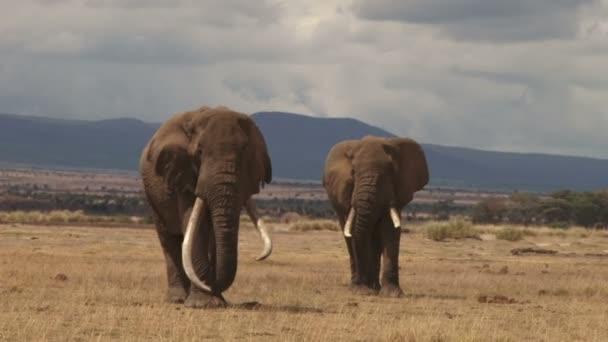 legnagyobb vadon élő elefántok