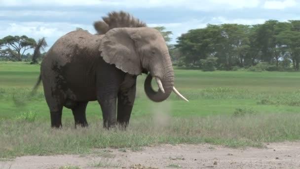 slon si prach na sebe