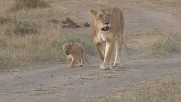 madre di leoni e due cuccioli