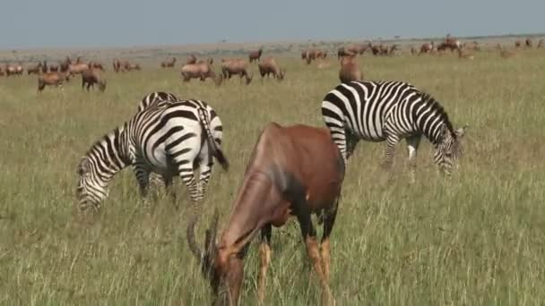 zebras and topis in the plains