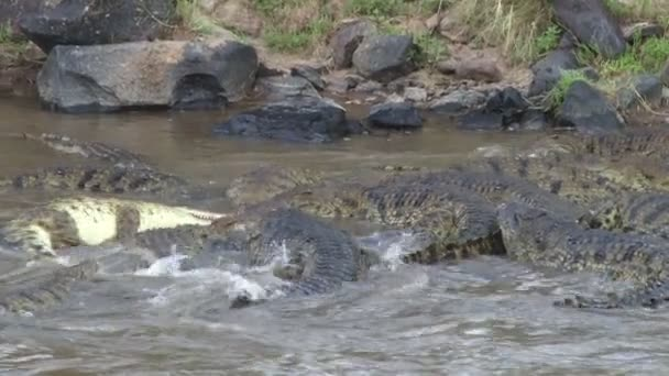 crocodiles rolling round