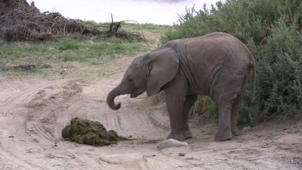 Baby elefánt trágya eszik