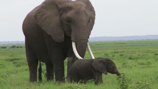 sloni matka a dítě