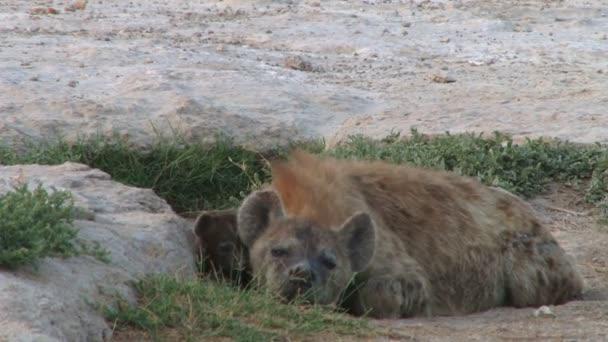 Iena madre e bambino in savannah