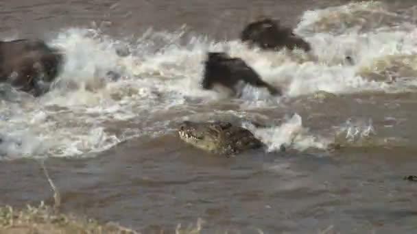 Krokodýli lovíte