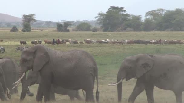 Masai e gli elefanti nelle paludi