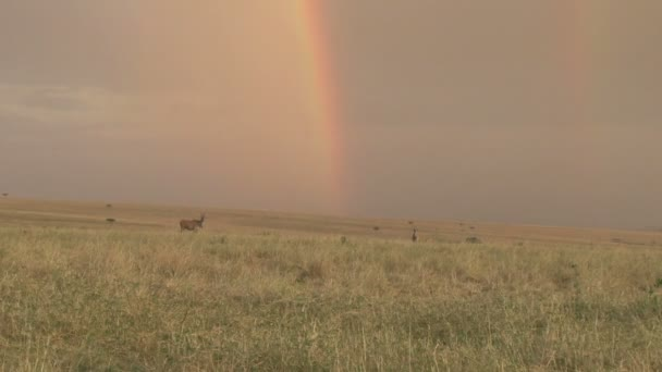 rainbow in the African park