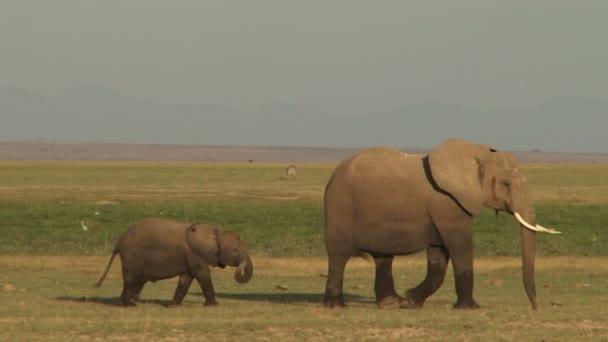 matka slon vede její dítě