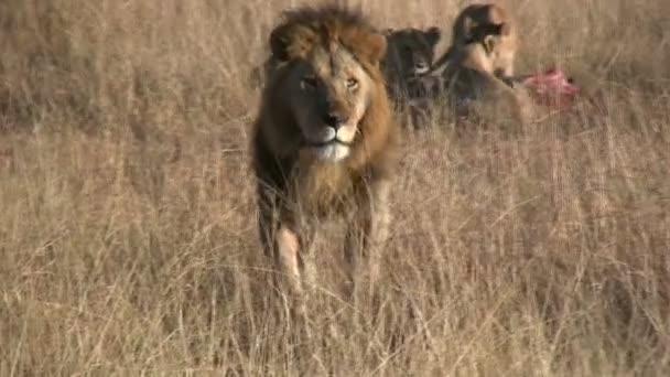 Lev odejde