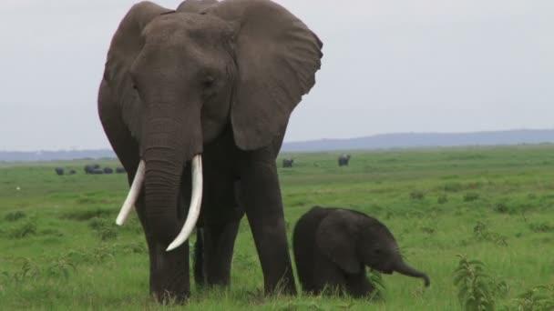 slon s dítětem pasoucí se v poli
