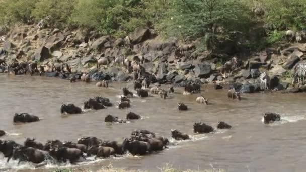 pakoně nemůže překročit řeku