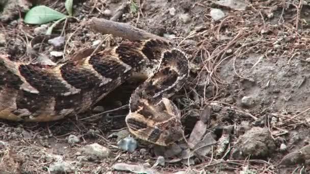 python snake crawling