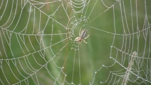 Spinne beendet sein Netz