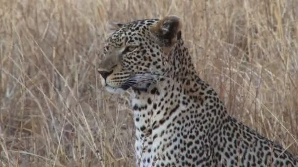 extreme closeup of a leopard