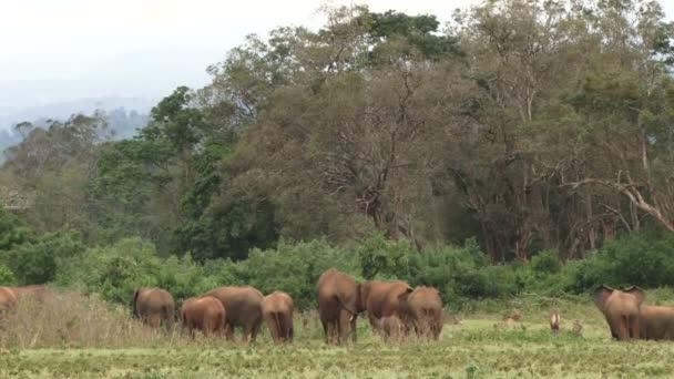 Sloni kráčející lesem
