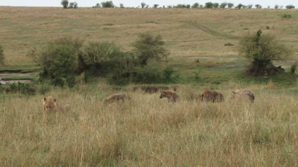 hyeny sledovat Lev jíst