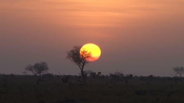 východ slunce za akácie