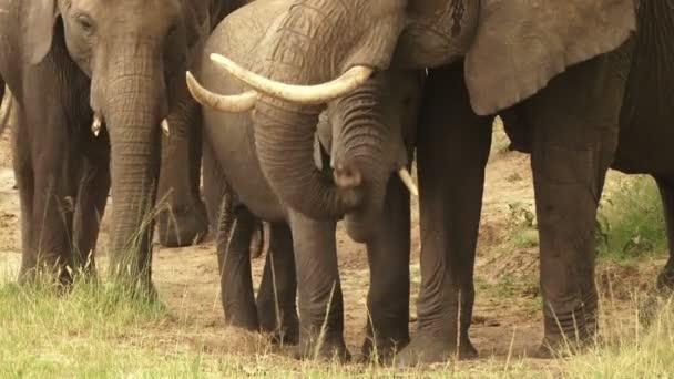 elefántok talaj eszik
