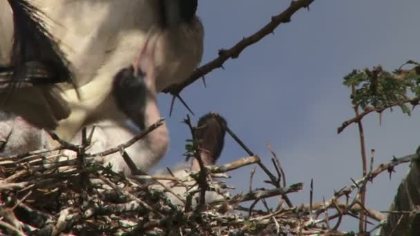Čas pro ibis krmení miminka