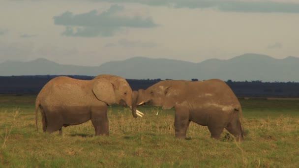 játszik a síkságon elefántok