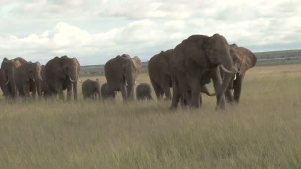 elefántok költözött a mocsárban