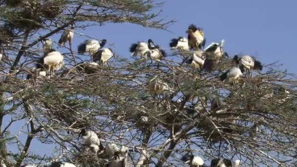 Ptáky na chov strom