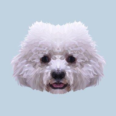 White Bichon Frise dog a