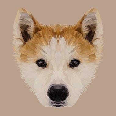Akita Inu dog animal