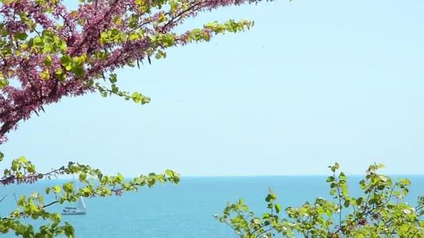 Krásná krajina s kvetoucí větve a jachty